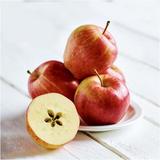 Gala Apples x 6